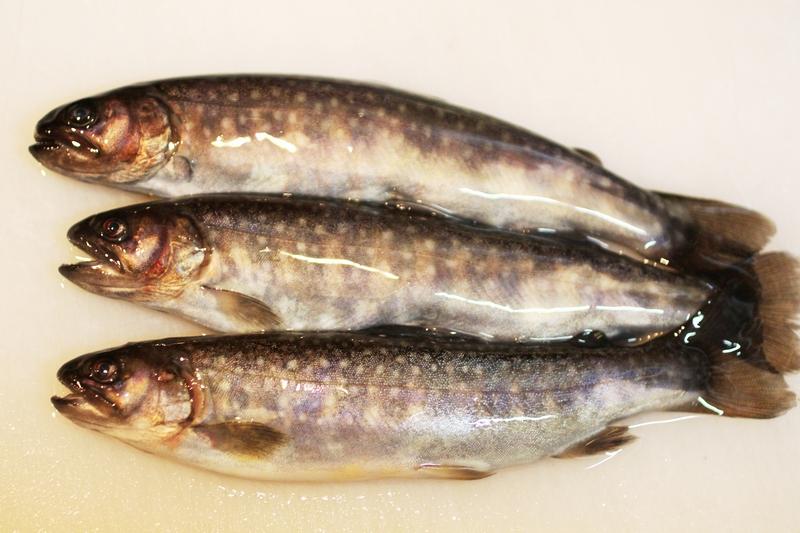 料理レシピ イワナの下準備 下処理方法 釣魚の料理法を画像入りで詳しく解説 釣りtiki東北